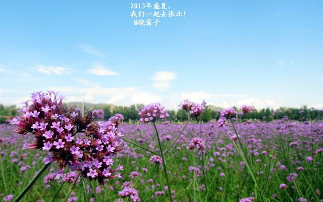 2013年盛夏,我们一起去张北