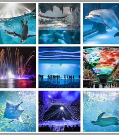 [珠海游记图片] 畅游陆地上的蓝色海洋——珠海长隆海洋王国全攻略