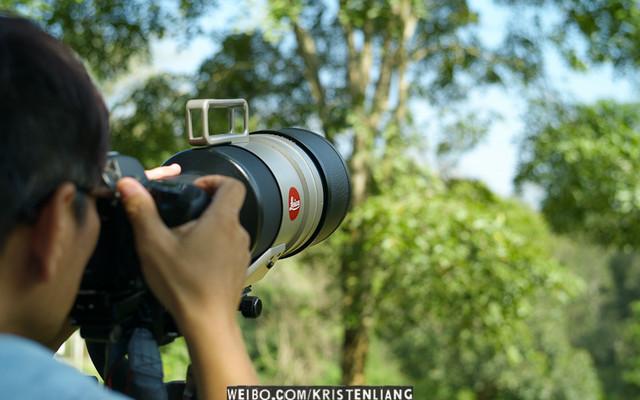 泰國拍鳥全紀錄:曼谷、清邁、甲米