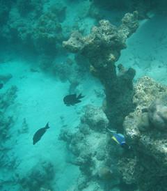 [绚丽岛游记图片] 绚丽岛--浮潜的天堂二