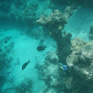 绚丽岛游记图文-绚丽岛--浮潜的天堂二