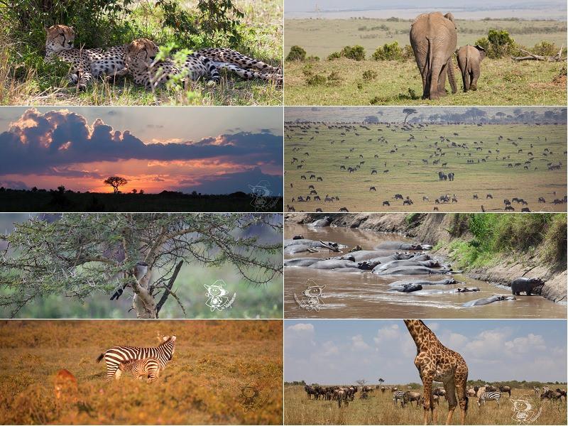 【肯尼亚】马塞马拉东非五霸,柏哥利亚湖火烈鸟粉红天堂,东非7天Safari精华美图&拍照小技巧 - 肯尼亚游记攻略【携程攻略】