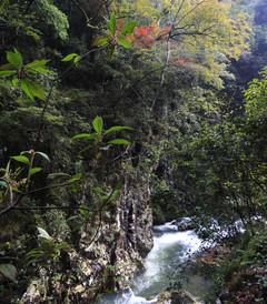 [安远游记图片] 林深无人鸟相呼 -- 江西安远三百山