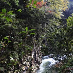 安远游记图文-林深无人鸟相呼 -- 江西安远三百山