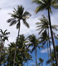 [巴厘岛游记图片] 巴厘岛8日自助游-我和老公的蜜月旅行