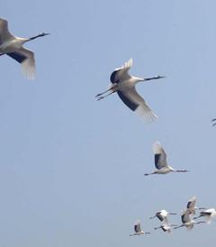 [齐齐哈尔游记图片] 扎龙湿地自驾半日游攻略