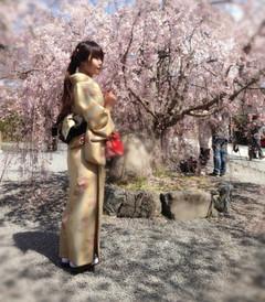 [京都游记图片] 日本关西城市浪漫樱花之旅