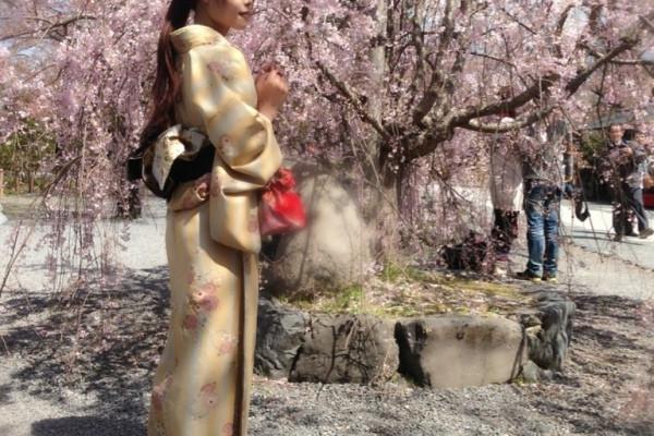 日本关西城市浪漫樱花之旅