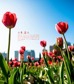 [福州游记图片] 福州花事.立春