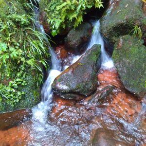 桫椤国家级自然保护区旅游景点攻略图