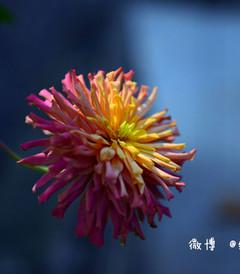 [江山游记图片] 【浙江】遗落大山深处梦般宁静的廿八古都