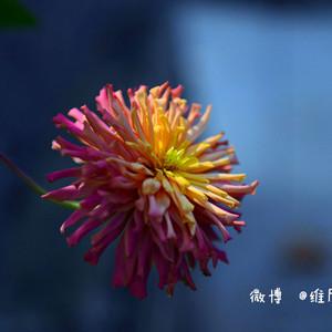 江山游记图文-【浙江】遗落大山深处梦般宁静的廿八古都
