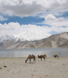 [敦煌游记图片] 最美的风景新疆、甘肃游记