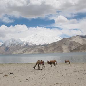 库尔勒游记图文-最美的风景新疆、甘肃游记