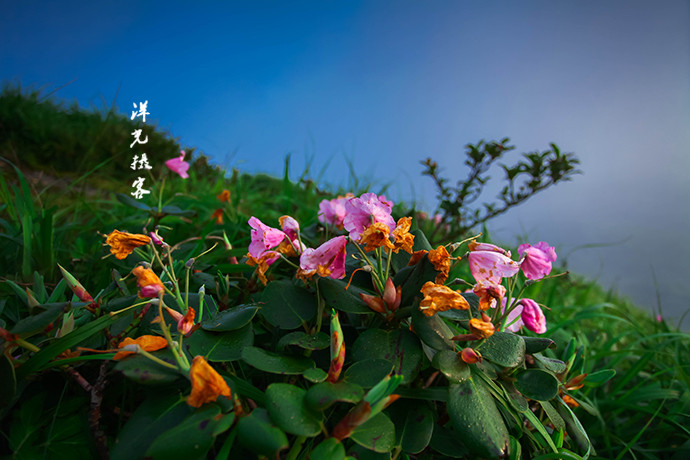 华南最高峰上藏稀有杜鹃 - 广西游记攻略