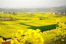 ❀油菜花在向你招手❀l三月神州大地上极美的油菜花田,都在这里了