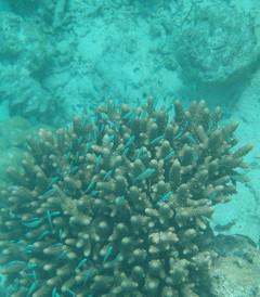 [绚丽岛游记图片] 马尔代夫4天6晚绚丽岛游记