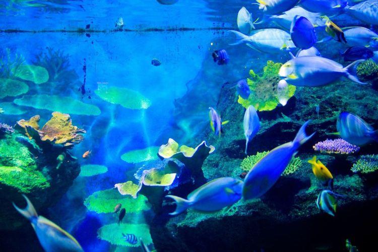 Sea Life Bangkok Ocean World4