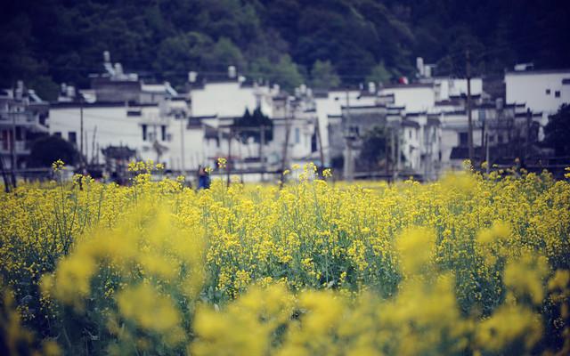 春天盛开的村庄——徒步穿越油菜花里的婺源(北京出发,全程花费900元穷游)
