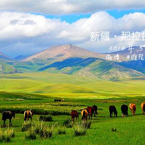 新源游记图文-新疆伊梨·心随马儿在草原飞驰