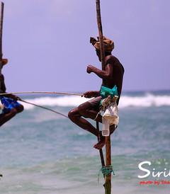 [加勒游记图片] 【加游站】#印度洋的眼泪#Mandara Resort Mirissa,寻找消失的高跷渔夫