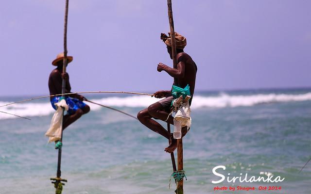 【加游站】#印度洋的眼泪#Mandara Resort Mirissa,寻找消失的高跷渔夫