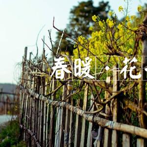 荆门游记图文-油菜花开的季节