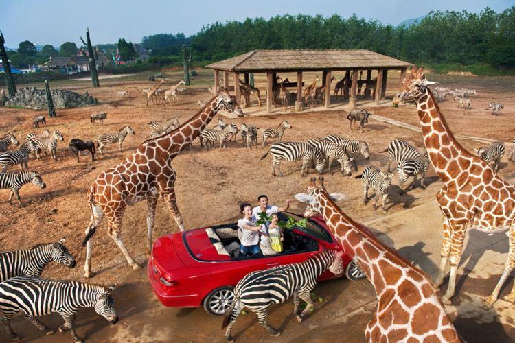 항저우 야생동물원(항주 야생동물세계)3