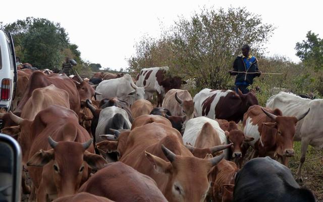 云游四海(39)野性肯尼亚之二——在路上