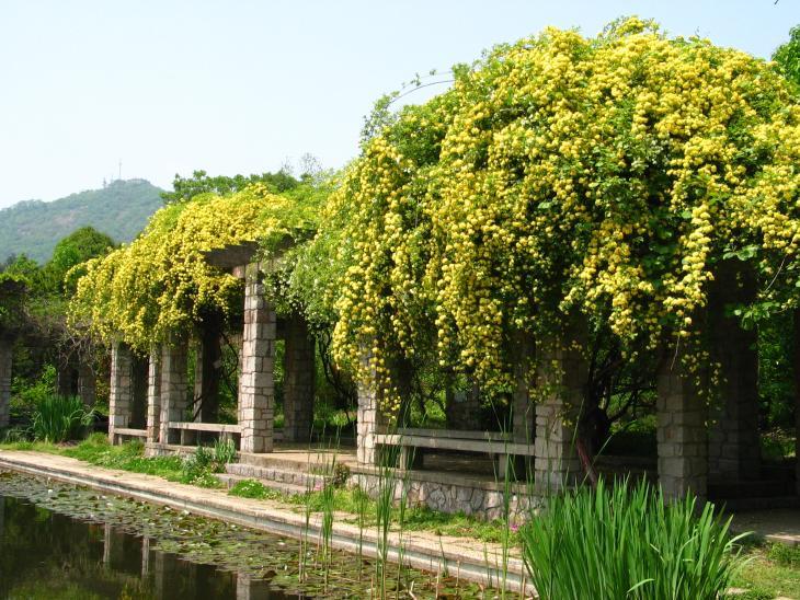 中山植物园旅游景点图片