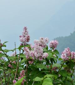 [涞源游记图片] 白石山.大自然.远古的呼唤