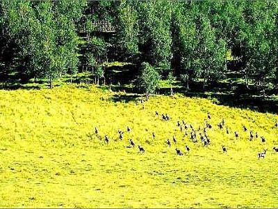 Hebei Luanhe River Shangyou Nature Reserve