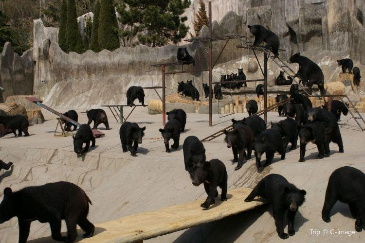 동방 곰 목장1