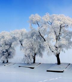 [吉林市游记图片] 吉林雾凇岛游记——走进童话般的世界