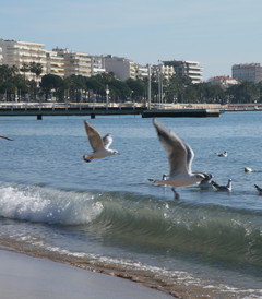 [普罗旺斯游记图片] 带上爸妈去旅行之二——沐浴在地中海冬日暖阳中——春节法国西班牙8日游