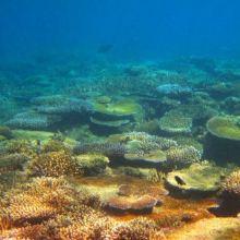 洛迈维蒂群岛图片