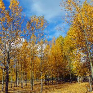 石棉游记图文-新都桥的秋天——只为了那一抹金黄