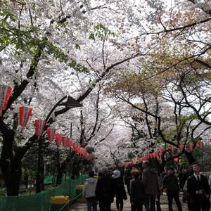忍野村游记图文-日本赏樱季——本州6日行