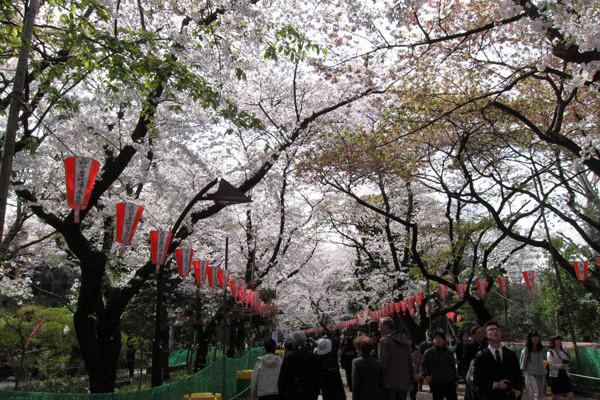 日本赏樱季——本州6日行