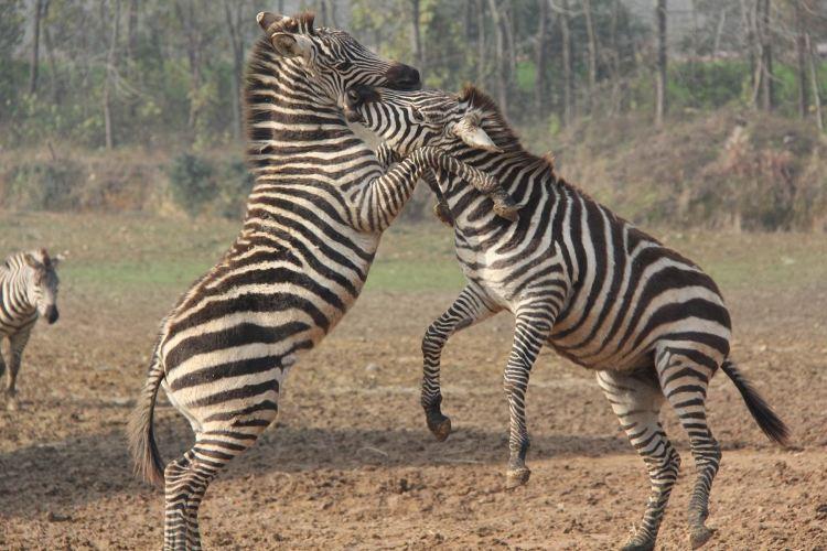 Hangzhou Safari Park4