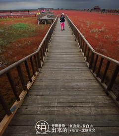 [沈阳游记图片] 在多人之【秋】扫平红海滩、长白山、延吉、沈阳故宫:站站在拼,一站都不能少