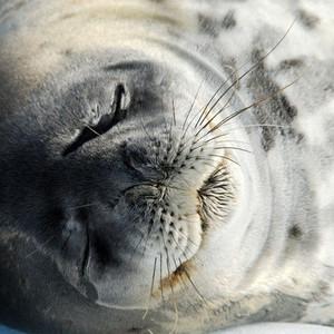 南极洲游记图文-南极!一生必去一次!