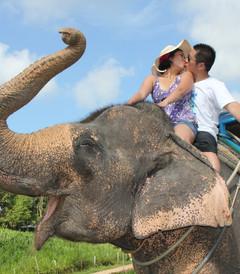[普吉岛游记图片] 曼谷-苏梅岛-普吉岛 蜜月之旅