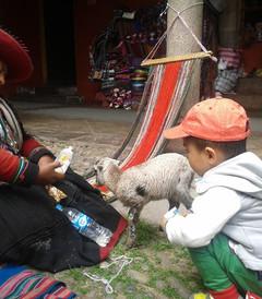 [马丘比丘游记图片] 带父母和2岁宝宝游智利复活节岛和秘鲁-完结篇