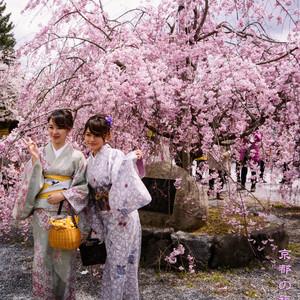 日本游记图文-去日本找春天,追着樱花由东往西
