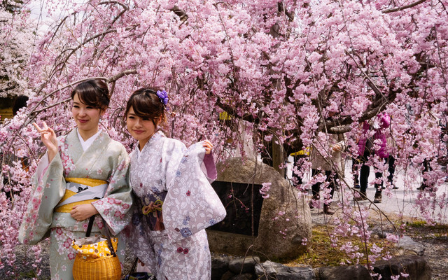 去日本找春天,追着樱花由东往西