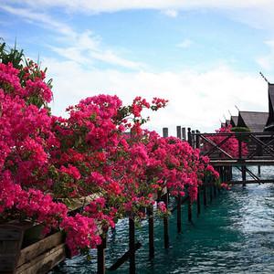 卡帕莱游记图文-那些天,我们在鲜花盛开的大海上(沙巴卡帕莱游记)