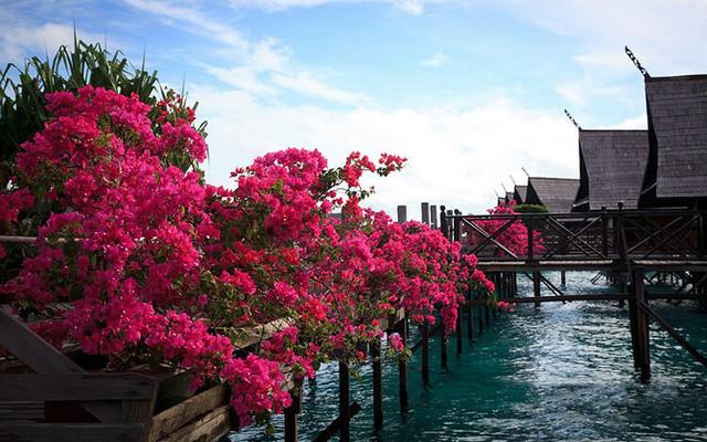 那些天,我们在鲜花盛开的大海上(沙巴卡帕莱游记)