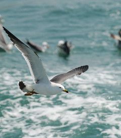 [长岛游记图片] 太平洋的风——山东长岛行