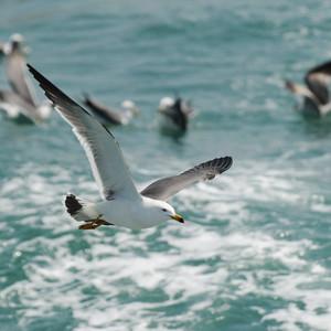 蓬莱游记图文-太平洋的风——山东长岛行